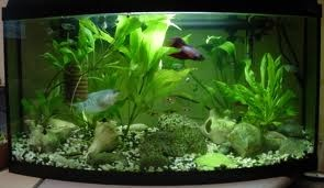 Here you'll discover a few top tips how to move an aquarium. Learn from the best experts from removal company London how to deal this task easily.
