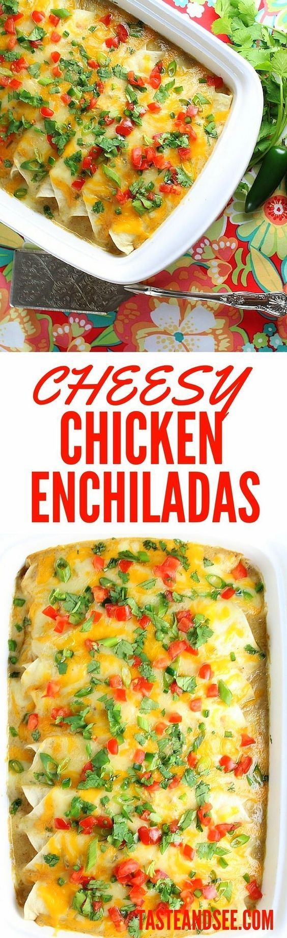 These easy Cheesy Chicken #Enchiladas are a sure-fire crowd-pleaser! With sour cream sauce, jalapeños, onions, garlic, cumin, Monterey Jack, and cheddar cheese. http://tasteandsee.com