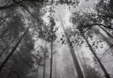 Trees in the mist (gippsland) By Photographer Lloyd Howlett www.australianphotos.com.au