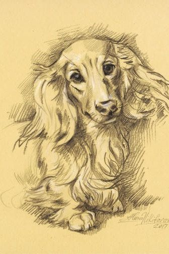 Dog portrait. Long Haired Dachshund Doxie-8.~ Instant Download ~ Printable artwork~ Sketch~Drawing by Alena Nikifarava ~ JPEG file  Ask a question $5.00