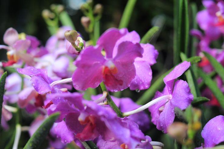 Orchid Collection