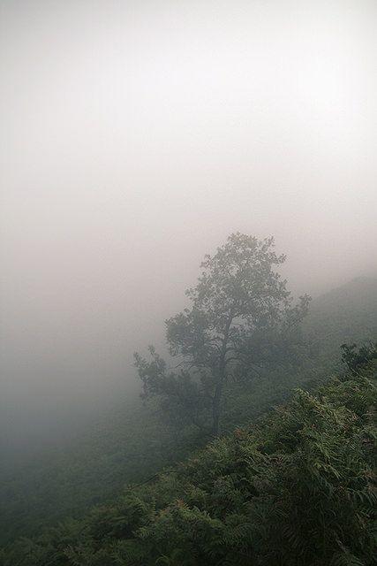 arbre et brouillard
