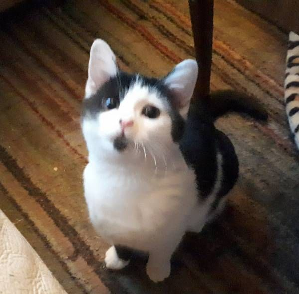 Found Cat 11 01 2018 Bradford West Yorkshire England United Kingdom Ref F40733 Critteralert Foundpet Foundcat Found Cat Cats And Kittens Cats