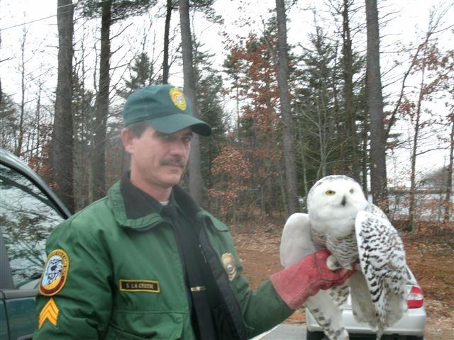 wings of dawn wildlife rehabilitation - Wildlife Biologist Job Description