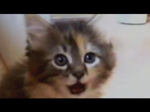 America's Funniest Home Videos Cats - http://pets-ok.com/americas-funniest-home-videos-cats-cats-8.html