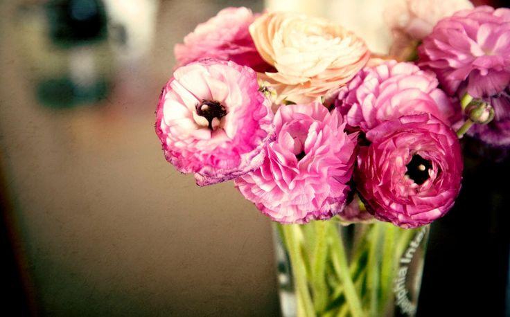 Flower Bud Pink Stone Black Heat Rose Images Hd Desktop Flower