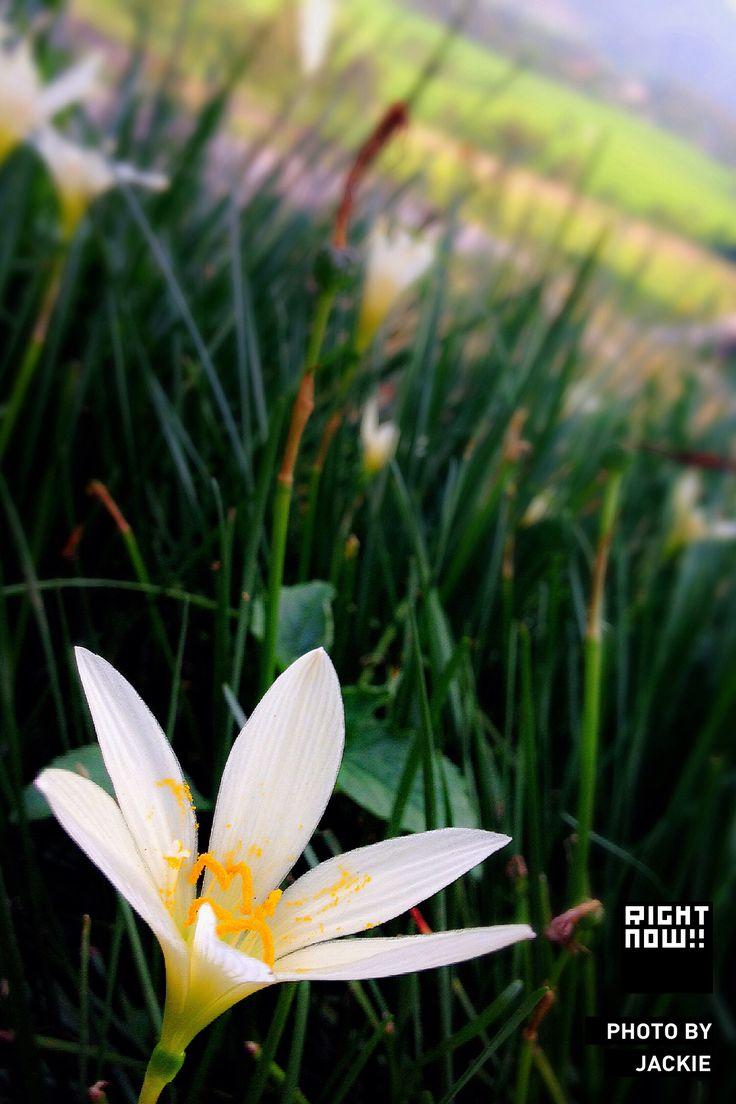Lost Flower