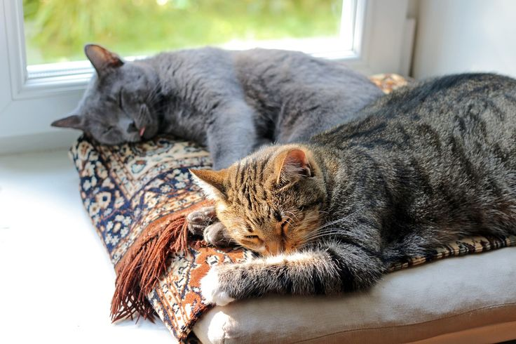 Cats get used to each other – How the cats work together (in 5 steps)