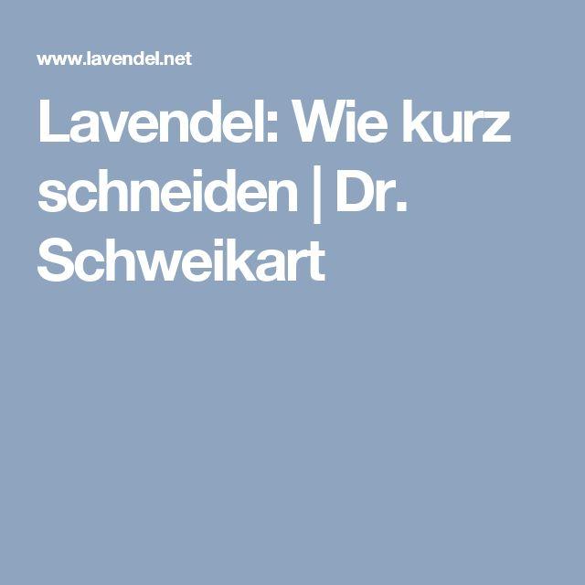 Lavendel: Wie kurz schneiden   Dr. Schweikart