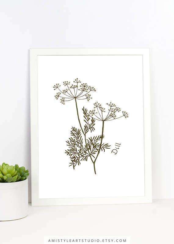 Kitchen Wall Decor - Printable hand drawn dill illustration for your kitchen by Amistyle Art Studio on Etsy