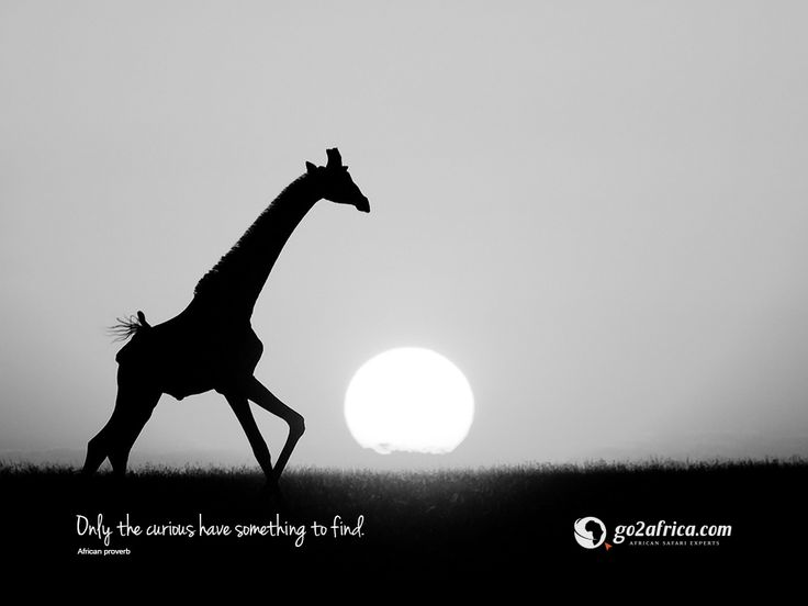 'Only the curious have something to find.' Click here for downloadable #inspirational #wallpapers: HD desktop: https://imglib_g2a.s3.amazonaws.com/img/20141126_065753_1_1.jpg iPad tablet: https://imglib_g2a.s3.amazonaws.com/img/20141126_065734_1_1.jpg