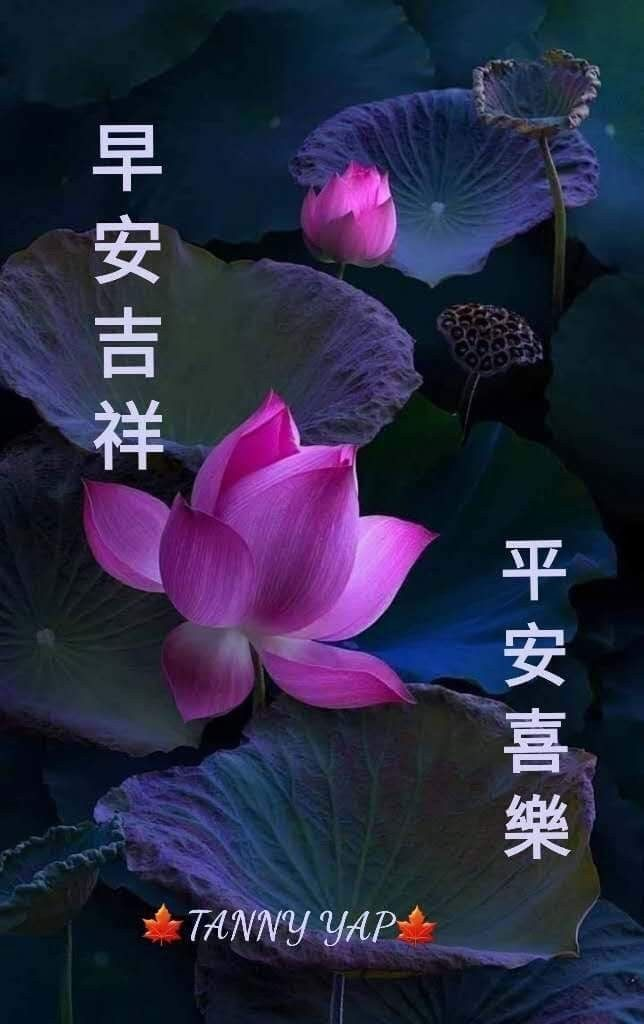 Pin By May On Good Morning Wishes Chinese Good Morning Wishes Poster Movie Posters