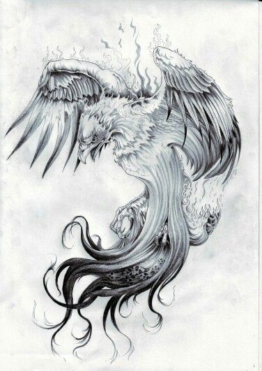 Phoenix tattoo-- Not crazy about the steam/smoke I'd remove that part