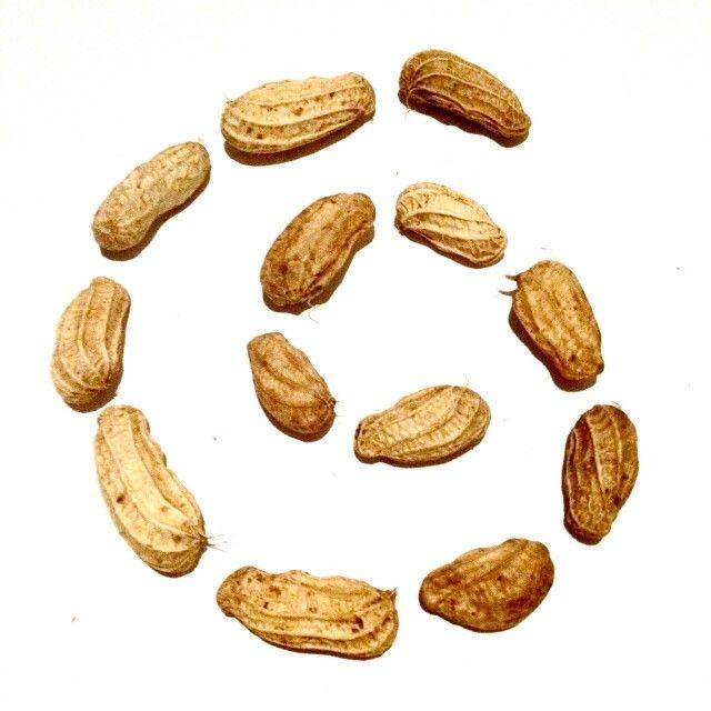 Twirling Peanut #richoz