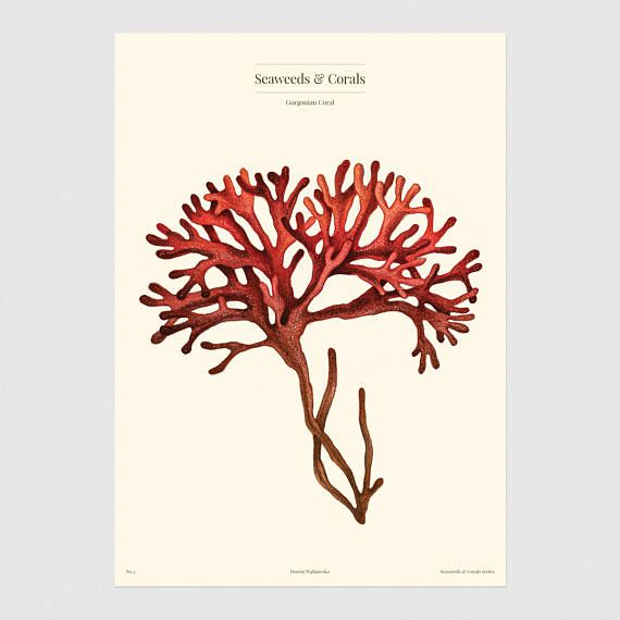 Red reef illustration // Red coral poster // Vintage style poster
