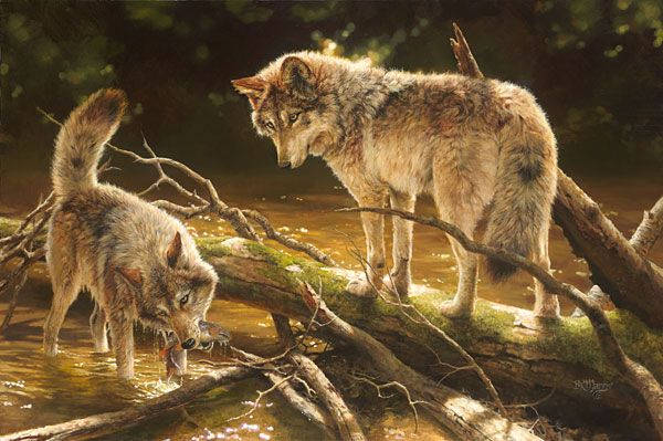 "Lucky Catch (Wolves) by Bonnie Marris LIMITED EDITION CANVAS Image size: 36""w x 24""h."