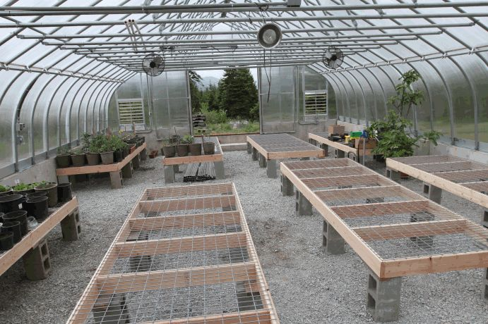 Top Greenhouse Tables The New Layout Much More Efficient Use Of Space Automatic Watering