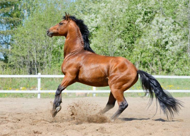 Dein Pferd testet Dich...