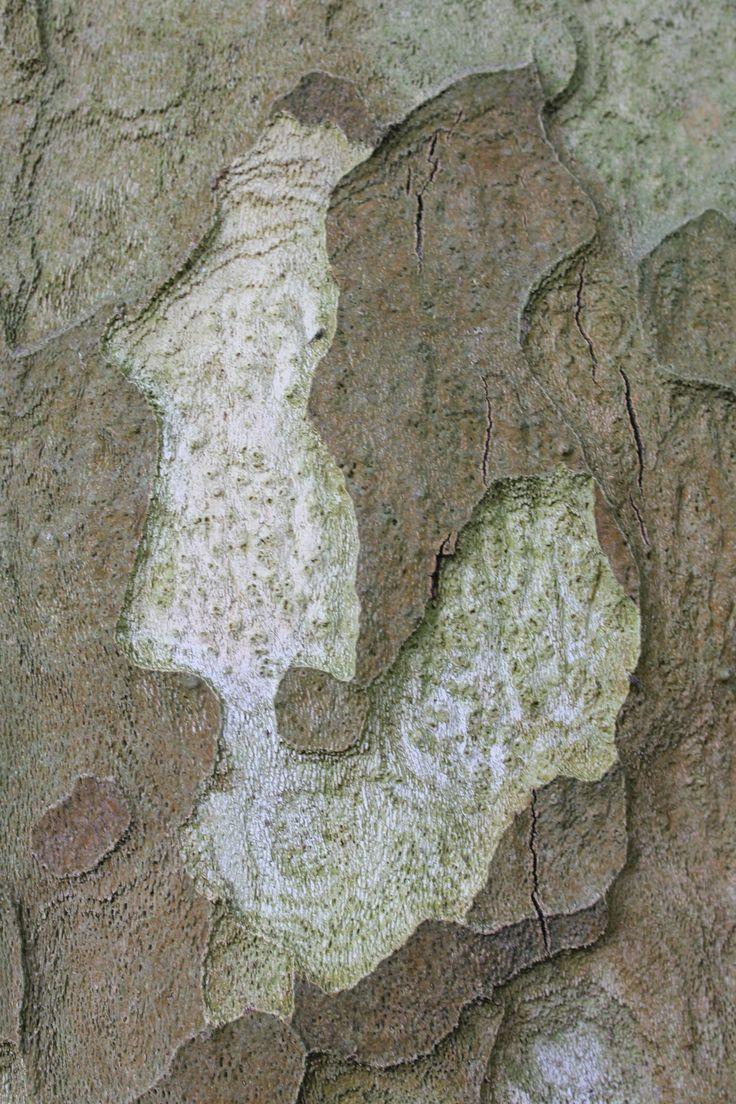 Boomschors- Tree bark