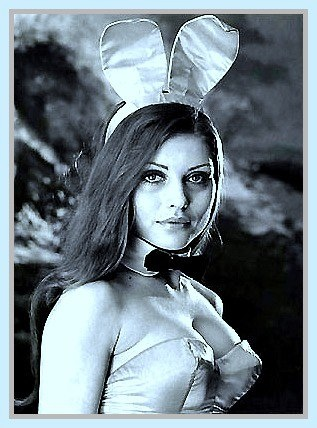 Image result for Debbie harry bunny girl