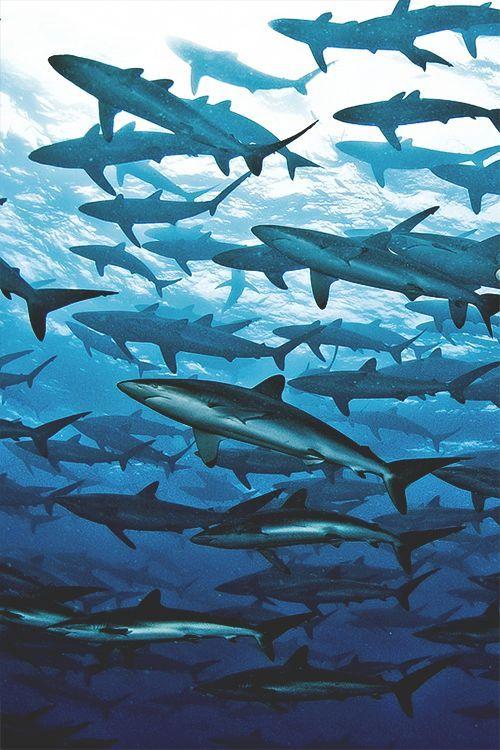 School of sharks. #sharks #underwater