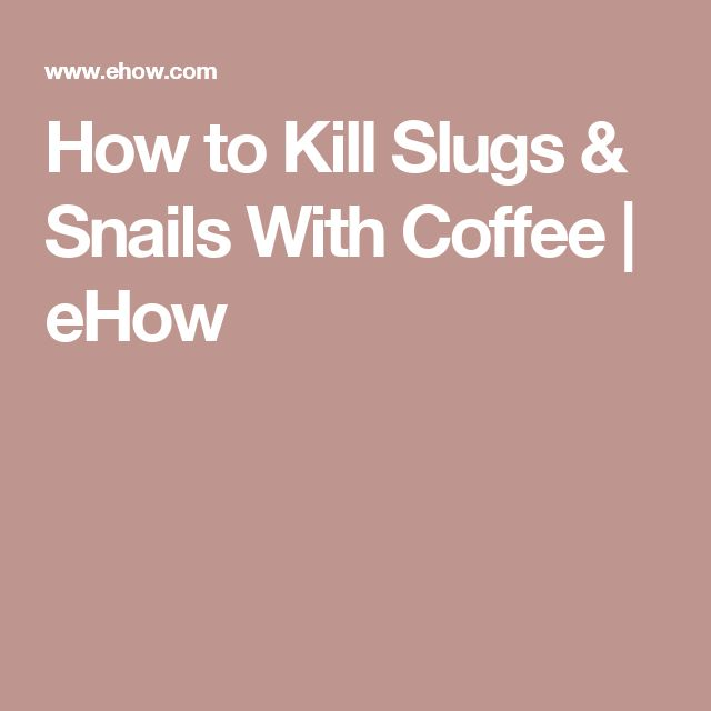 How To Kill Slugs Snails With Coffee Snail And Gardens