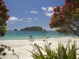 Pohutukawa Tree in Bloom and Hahei, Coromandel Peninsula, North Island, New Zealand Photographic Print by David Wall