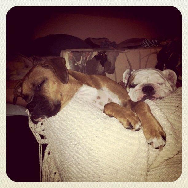 Sleepy Pups <3