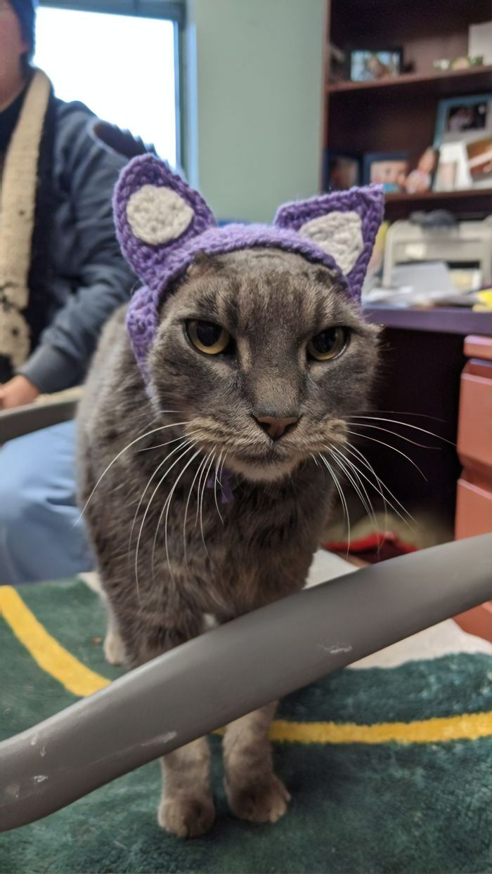 Stray Cat With Crocheted Ears Finally Finds A Forever Home In 2020