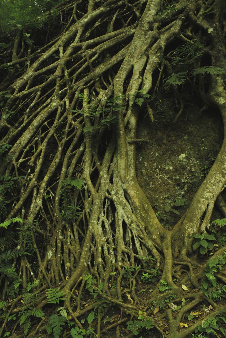 Roots Juanda Forest, Bandung Indonesia