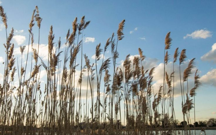 The Woodberry Wetlands Travel 2016