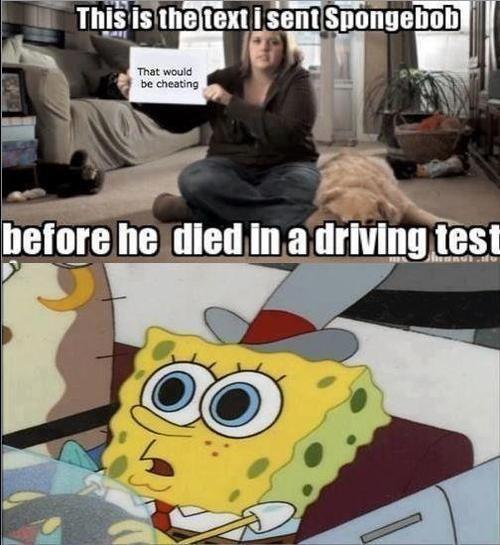 Funny Memes Kid Friendly Spongebob : Best spongebob images on pinterest