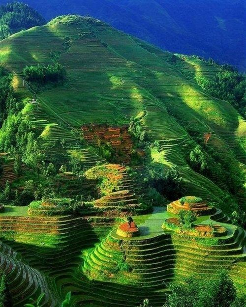 Guilin, Guangxi, China. The most popular are Ping An Rice Terrace and Jinkeng Rice Terrace.