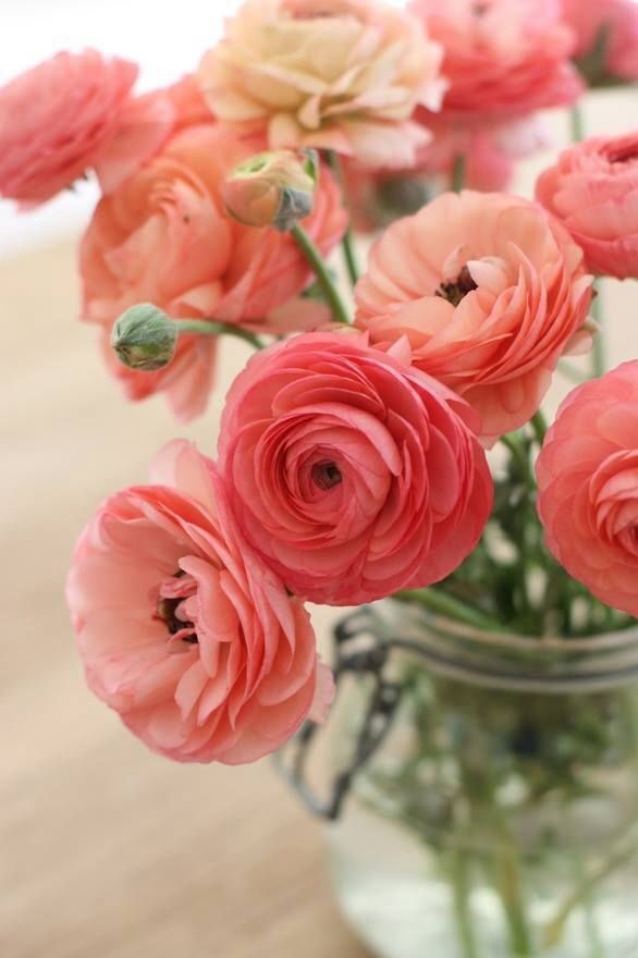 Pretty coral ranunculus flowers in a simple mason jar will brighten your day! #inspiringcolors #pretty #flowers