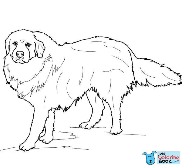 Download Great Pyrenees Coloring Pages Coloring Pages Dog