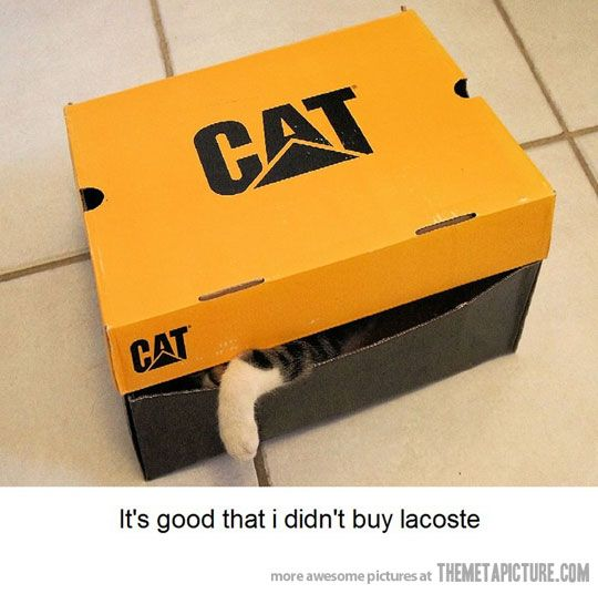 You get what you ordered: Good Things, Funny Cat, Funny Pictures, Hilarious Pictures, Cat Jokes, Cat Boxes, Funny Animal, Funniest Pictures, Buy Lacoste
