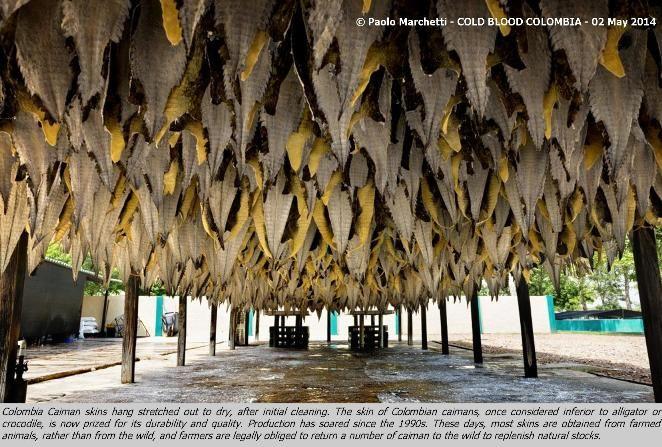 Torna il premio World Press Photo, uno dei più importanti riconoscimenti nell'ambito del fotogiornalismo. #WPP2015 #Roma #MuseoTrastevere #Fotografia #Fotogiornalismo #WorldPressPhoto