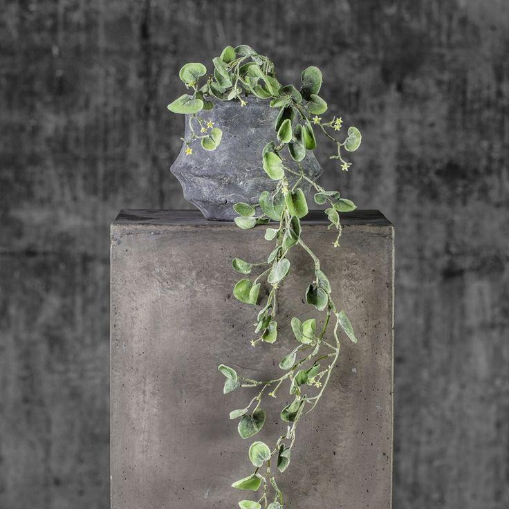 Silverfall hengeplante i potte