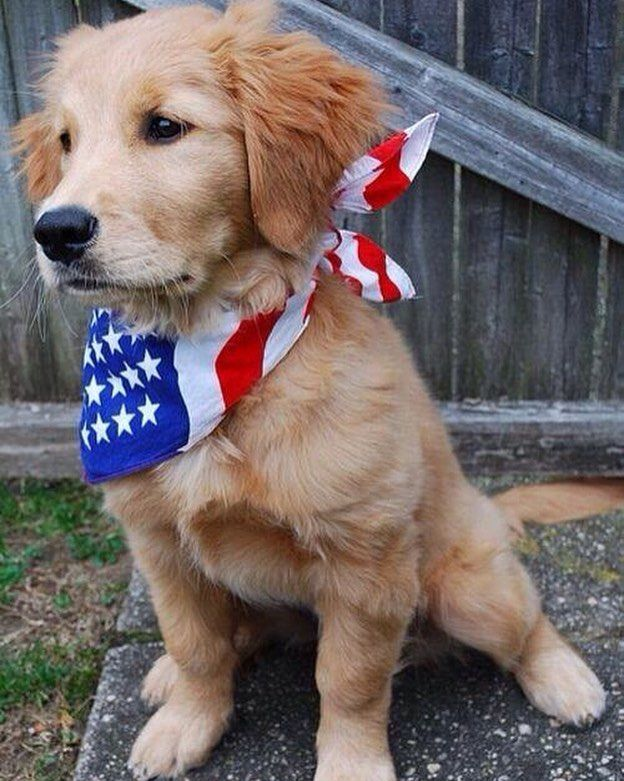 American super dog