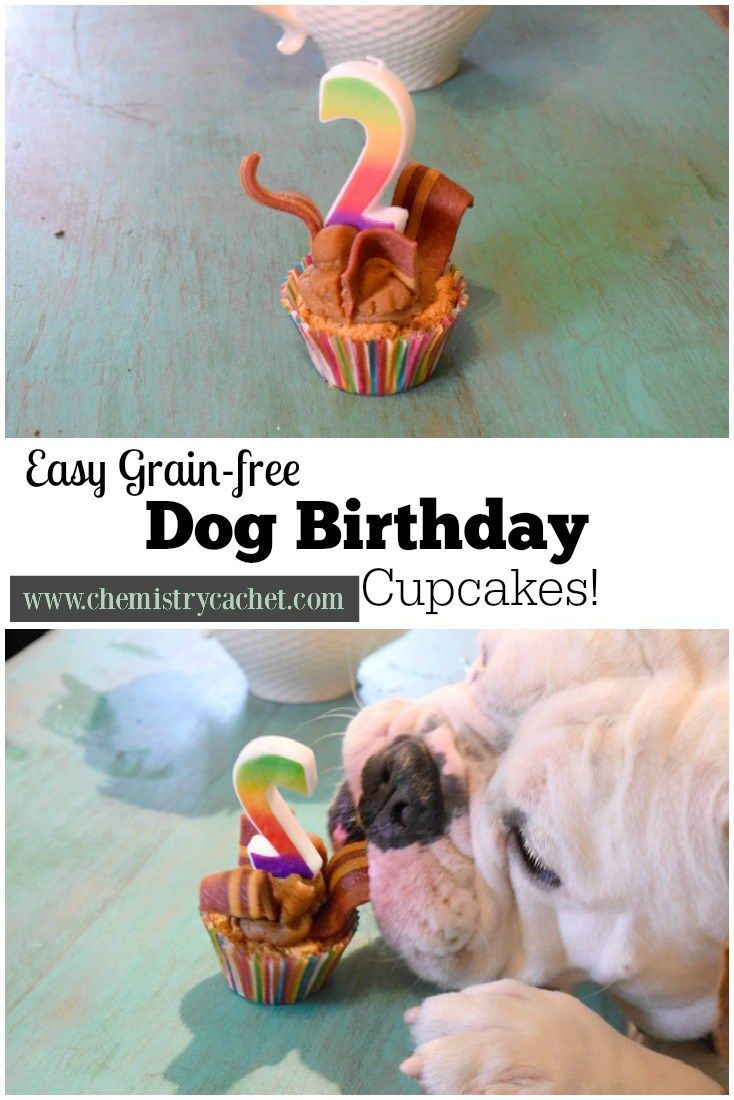Easy, grain-free dog birthday cupcakes! These are the prefect, healthy, sweet treat to celebrate your pups next birthday! on chemistrycachet.com