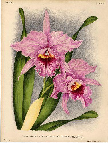 Las 25 mejores ideas sobre flores pintadas en pinterest y - Tiestos para orquideas ...