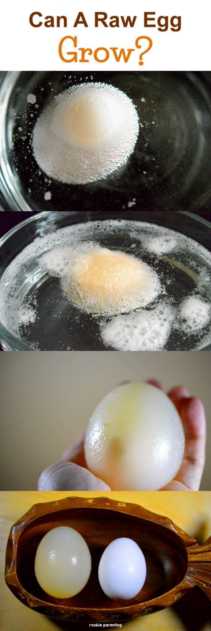 Egg & Osmosis - Bouncy Egg - #SimpleExperimentsForKids