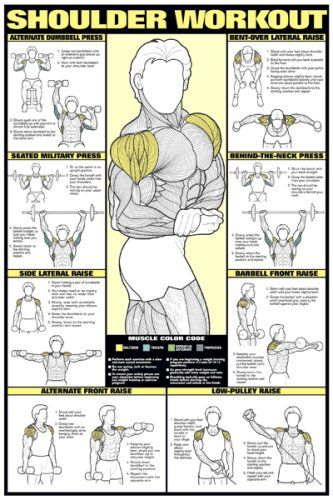 """#Shoulder #Workout 24"""" X 36"""" Laminated http://www.mysharedpage.com/shoulder-workout-24-x-36-laminated"""