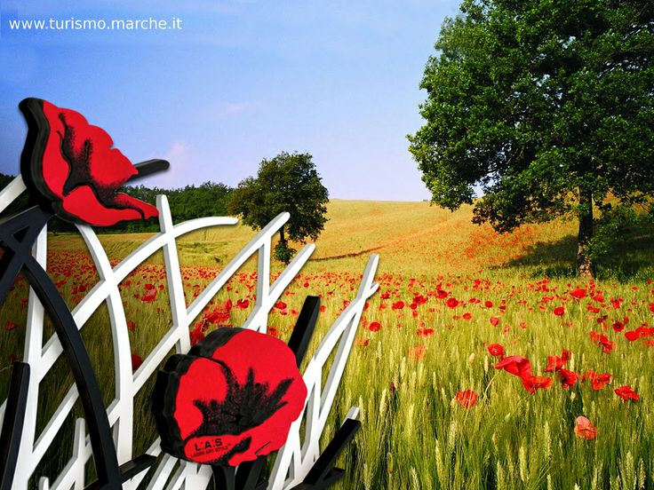 #CuriosityLAS Why the poppies? Tribute to the shine that surrounds us: endless inspiration for our creative team! #destinazionemarche #travel #nature #papaveri