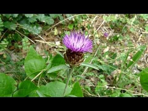 Flores prohibidas (con Josep Pàmies) - YouTube