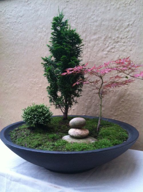 Muddy Boots Garden Design - Container Gardening - Bonsai for Busy People