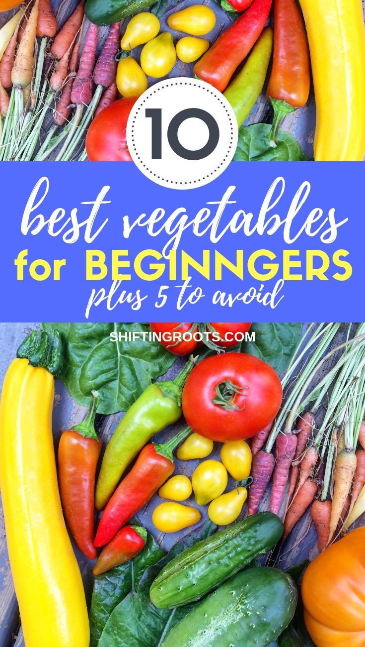 Planting your first garden?  Here's 10 of the easiest and best vegetables for be…