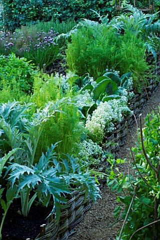 Potager (ornamental vegetable/kitchen garden) - Spencer Fung Architects for Daylesford Organic.