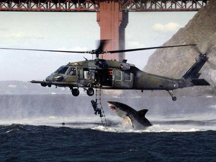 Great White Shark Attacks Helicopter | Shark Attacks Diver