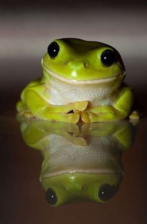 I love frogs.